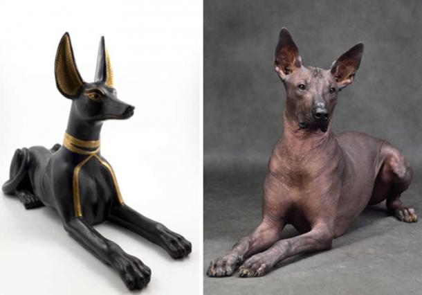 Вляво статуя на Анубис (eyeofprovidence / Adobe Stock), а вдясно обезкосмено куче Xolo (eAlisa / Adobe Stock).