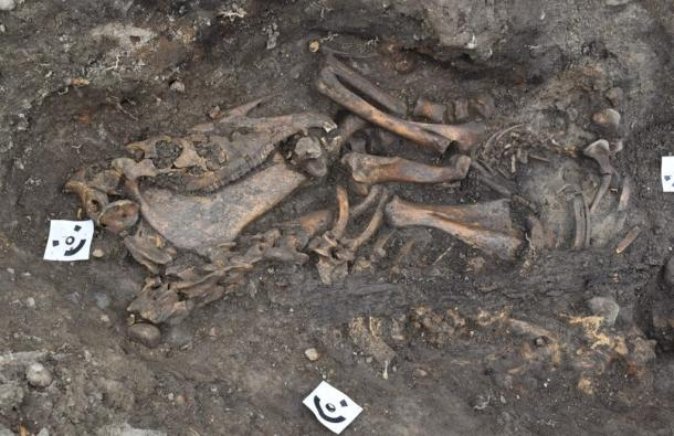 A skeleton of a man, buried with a horse and a dog, was found in one of the Viking ship burial sites. (Arkeologerna)