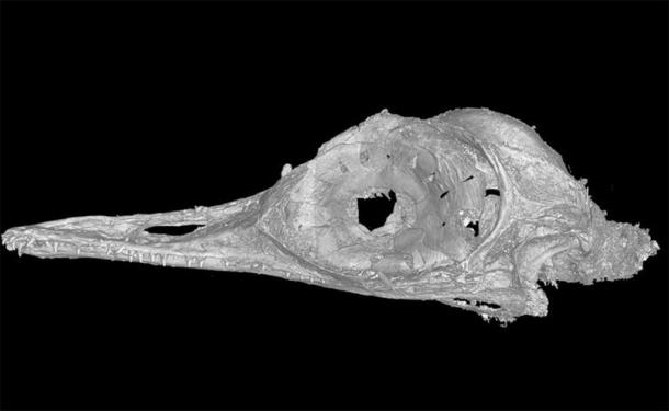 This high-resolution scan allowed us to see the intricacies of a bone structure unlike any before seen in birds or dinosaurs. Xing Lida, CC BY-ND / The Conversation