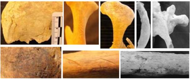 Examples of human cutmarks on the ancient Nepalese remains: (top L-R) frontal; mandible; scapula; rib; thoracic; (bottom L‐R) ilium; humerus; femur.