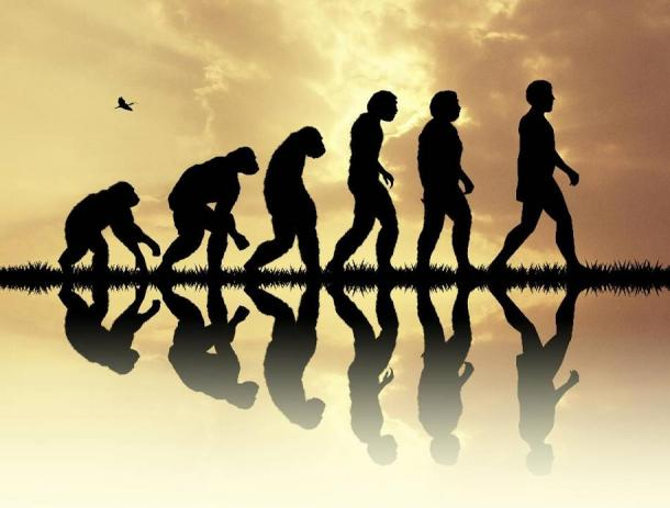 Origins Stories teaches us more about human evolution