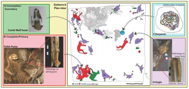 An schematic of the placement of animal bones and human remains at Teotihuacan, Mexico (Human reconstruction drawn by G. Pereira, animals drawn by N. Sugiyama