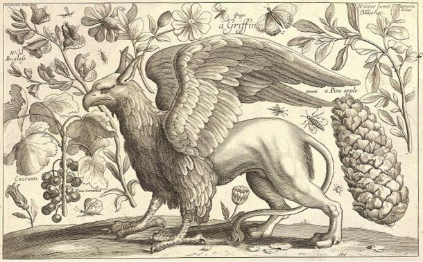 17th century illustration of a griffin, which combines parts from several different animals