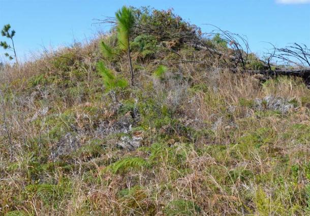 View of vegetation-covered tumulus on the Isle of Pines. (Author provided)