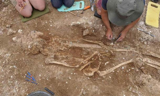 The body of the tall, muscular man found in the Anglo-Saxon warrior grave. (University of Reading)
