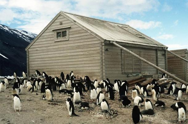 Borchgrevink's Hut at Cape Adare is located in an area that is home to over 400,000 Adeline Penguins. The hut is being conserved by the Antarctic Heritage Trust. The Antarctic fruitcake was just one of almost 1,500 artifacts collected at Cape Adare. (Antarctic Heritage Trust)