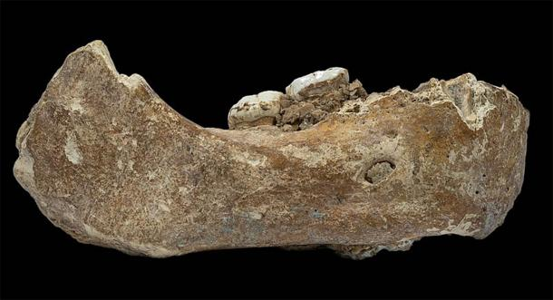 The Xiahe mandible is the first Denisovan fossil to have been discovered outside of the Denisova Cave in Siberia. Unearthed in the Baishiya Karst Cave by a Tibetan monk in 1980, scientists used protein analysis in 2019 to identify the ancient human from this ancient jawbone. (Dongju Zhang / CC BY-SA 4.0)