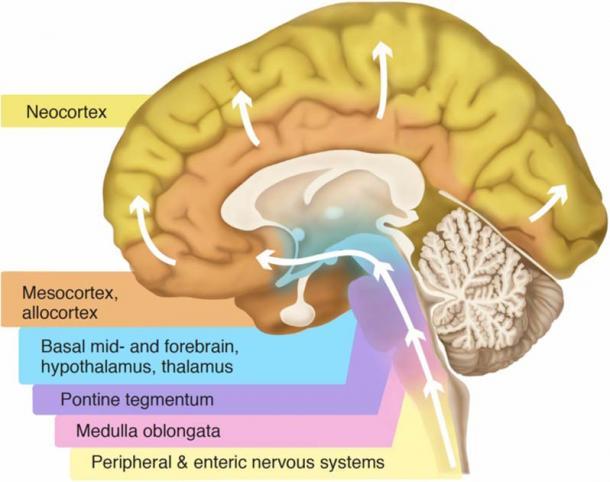 Parts of the brain. (Visanji, Naomi P., Patricia L. Brooks, Lili-Naz Hazrati, and Anthony E. Lang/CC BY 2.5)