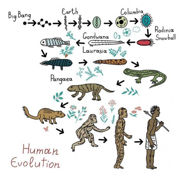 Evolution: from single cells to intelligent life, and then human evolution. An unlikely, essentially rare chain of events and likely not statistically possibly beyond planet earth. (elyomys / Adobe Stock)