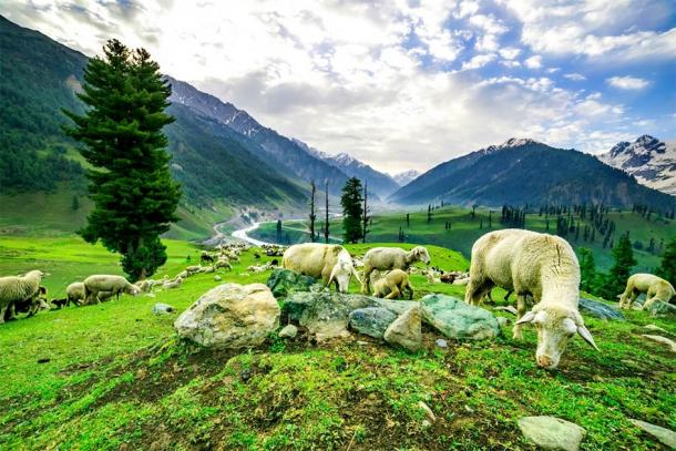 Every year in the Valley of Kashmir, spring would bring with it hope after the long months of winter. (khlongwangchao / Adobe Stock)