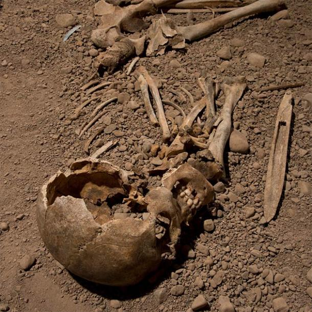 Researchers used genomic DNA extracted from the skeletal remains of a male individual associated with the Neolithic Battle Axe culture to try to understand the genomic ancestry of the Scandinavian culture and its relationship to the broader Corded Ware culture. (Jonas Karlsson / Östergötlands Museum)