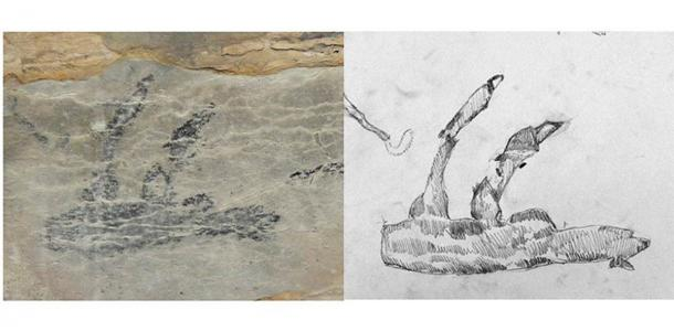 Multiple experts agree that the only creature the cave drawing could represent is the now extinct giant sloth, said to have existed only in Madagascar. (© Burney et al. 2020 / tandfonline)