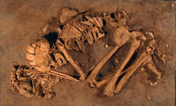 In northern Israel, archaeologists discovered the remains of a 12,000-year-old Natufian woman with her hand resting on a pet puppy, at the 'Ain Mallaha site. This is one of the first known remains related to dog domestication. (The Israel Museum, Jerusalem)