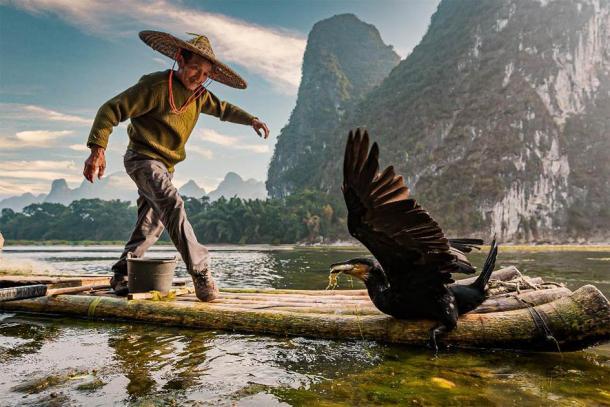 A fisherman trains his cormorant to catch fish. (imphilip /Adobe Stock)