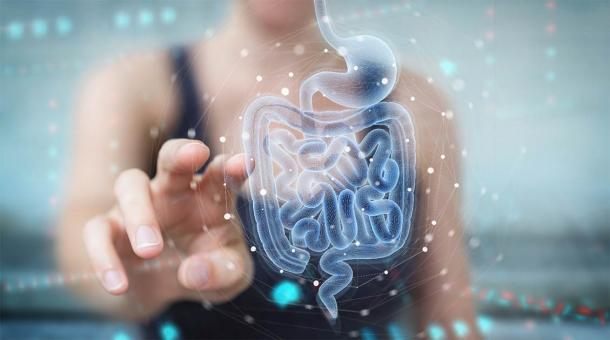 The human gut microbiome is a key part of human health, but it has changed over the centuries. In some ways, the medieval gut bacteria of ancient people was a healthier mix than what modern people have. (sdecoret / Adobe Stock)