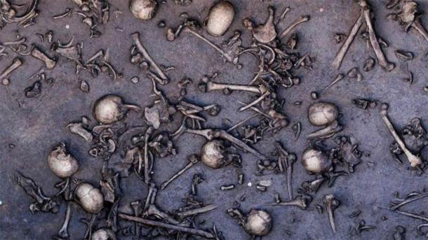 The bones of the dead found at the Tollense battle site, which is now known to be Europe's oldest massacre site. (State Office for Culture and Preservation Meckleburg-Vorpommern)