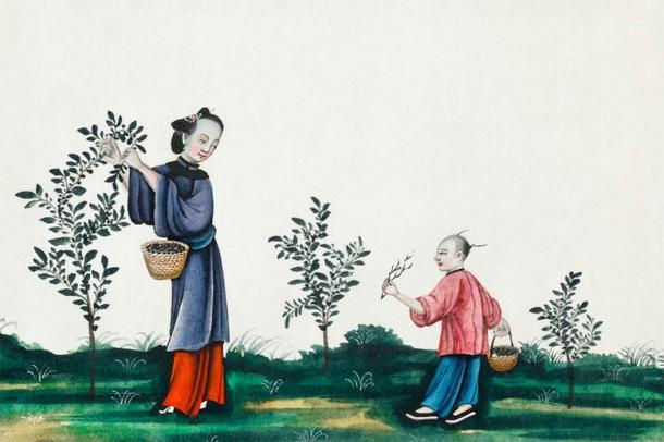 Chinese painting illustrating a mother and a son plucking tea sprouts (ca.1800–1899) from the Miriam and Ira D. Wallach Division of Art, Prints and Photographs (CC0)