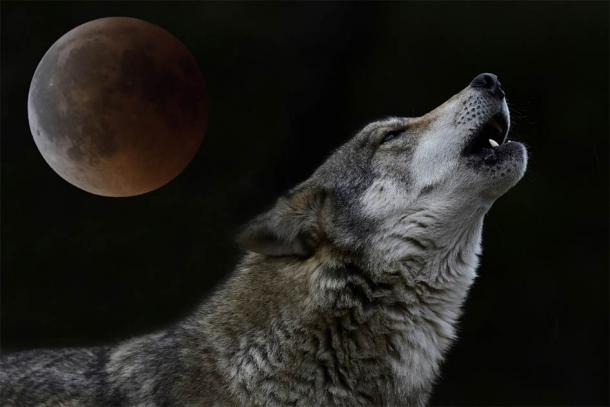 """A wolf howling at full moon: wolves formed a key part of Slavic mythology and beliefs. These beliefs were then """"hijacked"""" by Christianity and turned into something else. (bennytrapp / Adobe Stock)"""