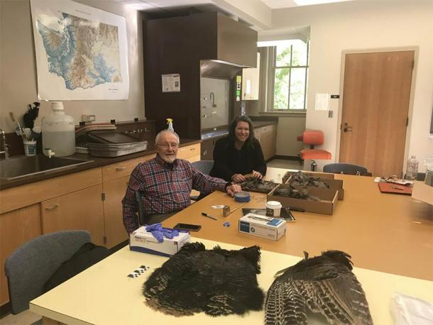 Bill Lipe and Shannon Tushingham collect feathers from a wild turkey pelt in Tushingham's lab at Washington State University. (WSU)