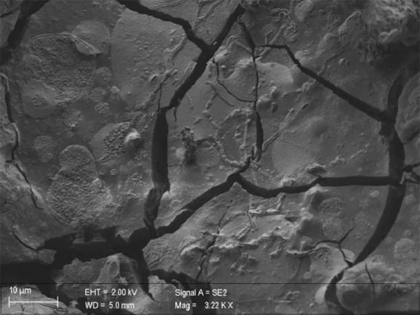 A neuron, along with its axons, is visible in this vitrified segment of brain tissue from a victim who was covered by ash when Mount Vesuvius erupted in 79 AD. (Pier Paolo Petrone, University Federico II of Naples, Italy)
