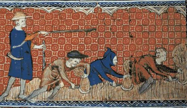 Medieval illustration from 1310 of men harvesting wheat with reaping-hooks. (Public Domain) Life was especially hard for medieval serfs.