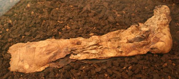 Lindow Man's right foot. (Einsamer Schütze / CC BY-SA 3.0)