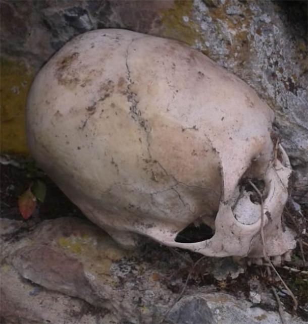 One of two elongated skulls discovered in the mountains in the Cuzco region of Peru, North of Abancay. (Image: © Philip J.S. Jones)