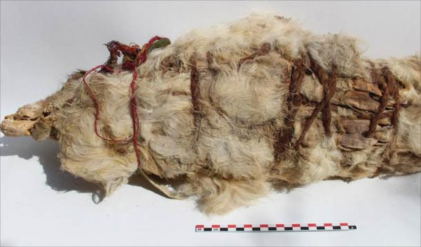 A mummified white llama sacrifice. (L.M. Valdez /Antiquity Publications Ltd)