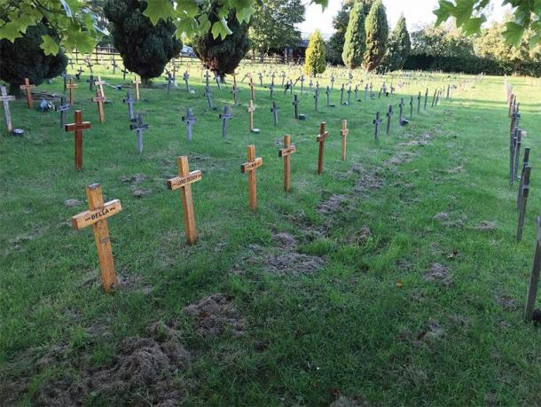 Wooden cross grave markers characteristic of the Buena Vista pet cemetery, Leicestershire. ( K. Bridger/Antiquity)