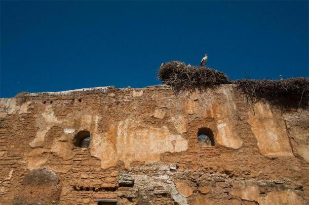 Convinced that the stork was leaving presaging the destruction of its nest, the superstitious Attila ordered his army to stay and attack the part of the walls left by the stork… (Mr.Ilkin /Adobe Stock)