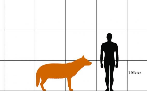 Size comparison of a dire wolf and a human. (Aledgn/CC BY-SA 4.0)