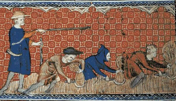 Medieval illustration of serf men harvesting wheat with reaping-hooks on the orders of a reeve. (Anonymous (Queen Mary Master) / Public domain)