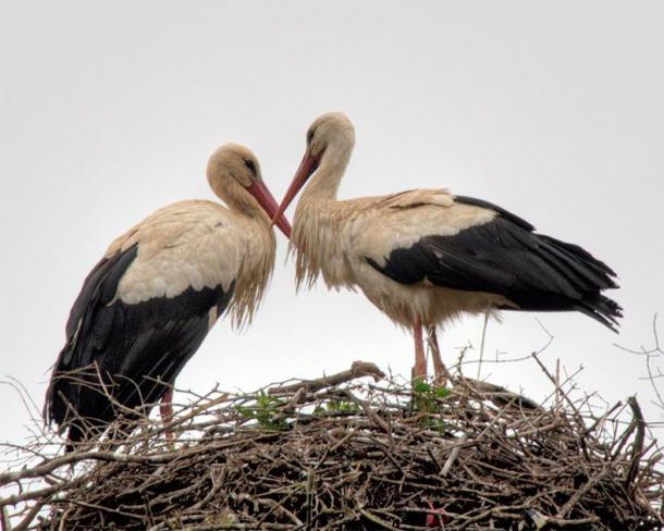 Storks in the ruins of Chellah, ancient Roman ruins in Rabat, Morocco. (Cocoabiscuit/CC BY NC ND 2.0)