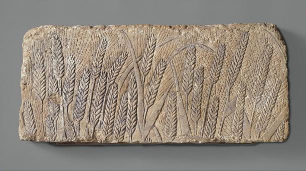 A beautiful carving of ripe barley, from an Amarna talatat block. It shows life-size ears of barely, delicately carved, swaying in a gentle breeze, in a form of art never before seen in Egypt, but typical of the naturalistic art of Akhenaten (Met Museum / Public domain)