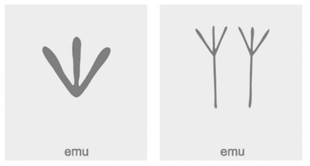 Emu symbols. (drutska / Adobe Stock)