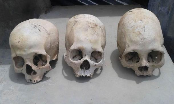 Three of the skulls, including the two extended skulls. (Image: © Philip J.S. Jones)