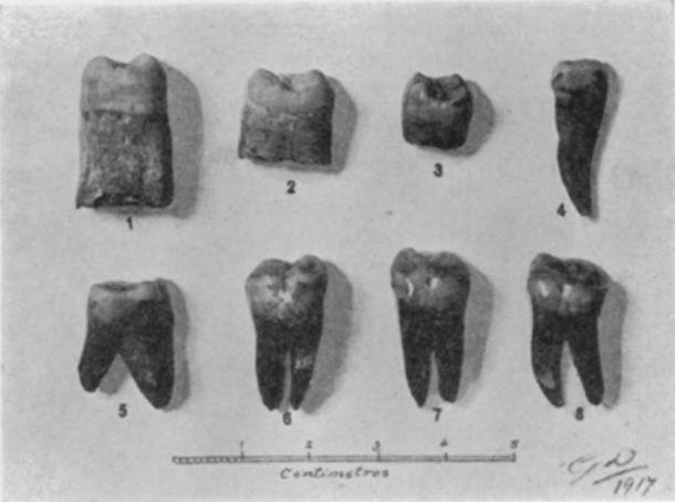 Photograph of the teeth found in 1917 suggesting evidence of Paleolithic humans in Malta. (Giuseppe Despott / Sir Arthur Keith)
