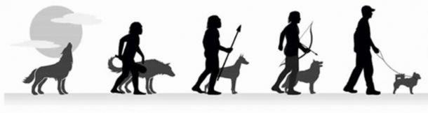 The evolution of wolf to domestic pet. (CC BY SA 4.0)