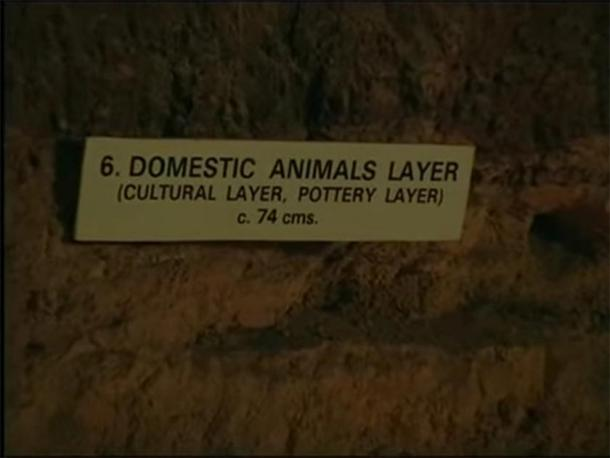 Level 6 – Domestic animals. (Provided by author)