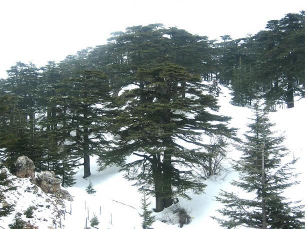 Al Arzz above Bsharri (Forest of the Cedars of God), Lebanon. (BlingBling10 / CC BY-SA 3.0)