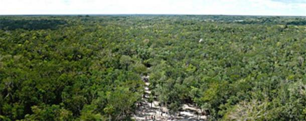 Miles and miles of jungle, as seen from the top of the Mayan Nohoch Mul pyramid on the northern edge of the Cobá archeological site. (Ken Thomas / Public Domain)