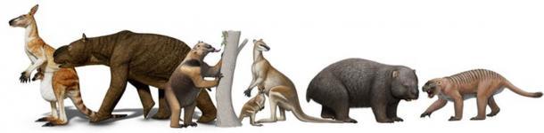 Mega-mammals from Pleistocene tropical Australia. (V. Konstantinov, A. Atuchin, S. Hocknull. Queensland Museum)