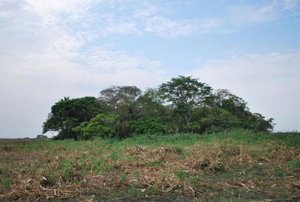 View of La Chacra forest island in the Bolivian Llanos de Moxos. (José Capriles/PSU)