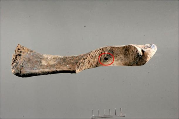 The injury on the left jugal bone is believed to be 'the final blow' aimed to the base of the trunk.