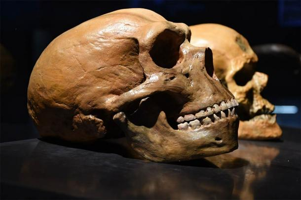 The long history of mating between Denisovans, humans, and Neanderthals has only recently been demonstrated through the analysis of ancient genomes. (Bruder /Adobe Stock)
