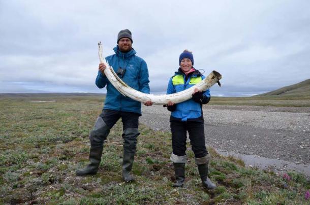 Love Dalén and co-lead author Patrícia Pečnerová with a mammoth tusk on Wrangel Island. (Credit: Gleb Danilov)