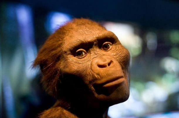 Could Zana have been from a surviving species of pre-human hominids, like 'Lucy', Australopithecus Afarensis?