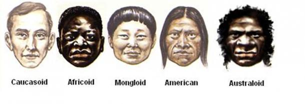 The main variants of the Homo Sapiens