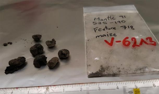 Centuries-old maize sample, ready to be radiocarbon dated. (Image: Eva Wild / CC BY-ND )