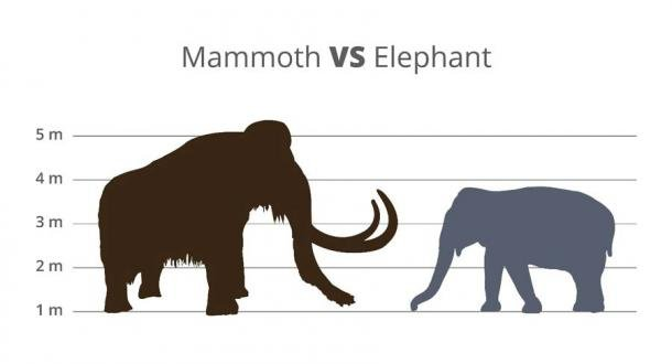 """The woolly mammoth hybrid will be """"built"""" by editing Asian elephant DNA. (petrroudny / Adobe Stock)"""